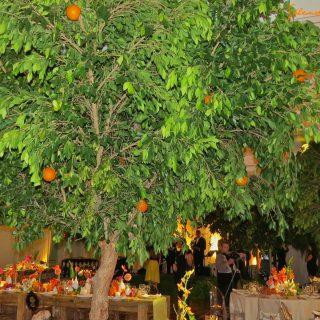 Dancing in a citrus grove…