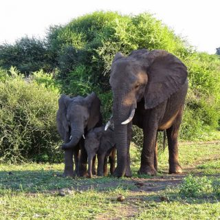 The Big Five, The Little Five and the gorgeous wildlife in between, Botswana, Africa…