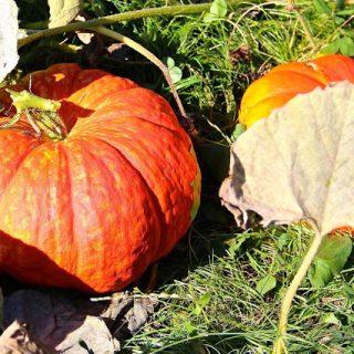 Pumpkin love… #forever