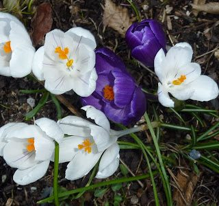 Signs of Spring