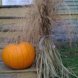 More pumpkinspiration…