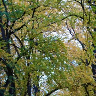 The Road Not Taken, and the poetic departure of the stunning autumn leaves…
