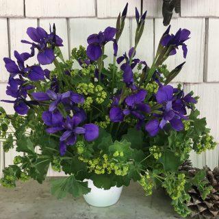 iris in abundance, a lazy lady's dream…