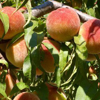 A peach of a breakfast bowl..