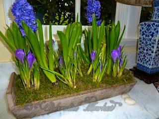 an indoor meadow of spring flowers