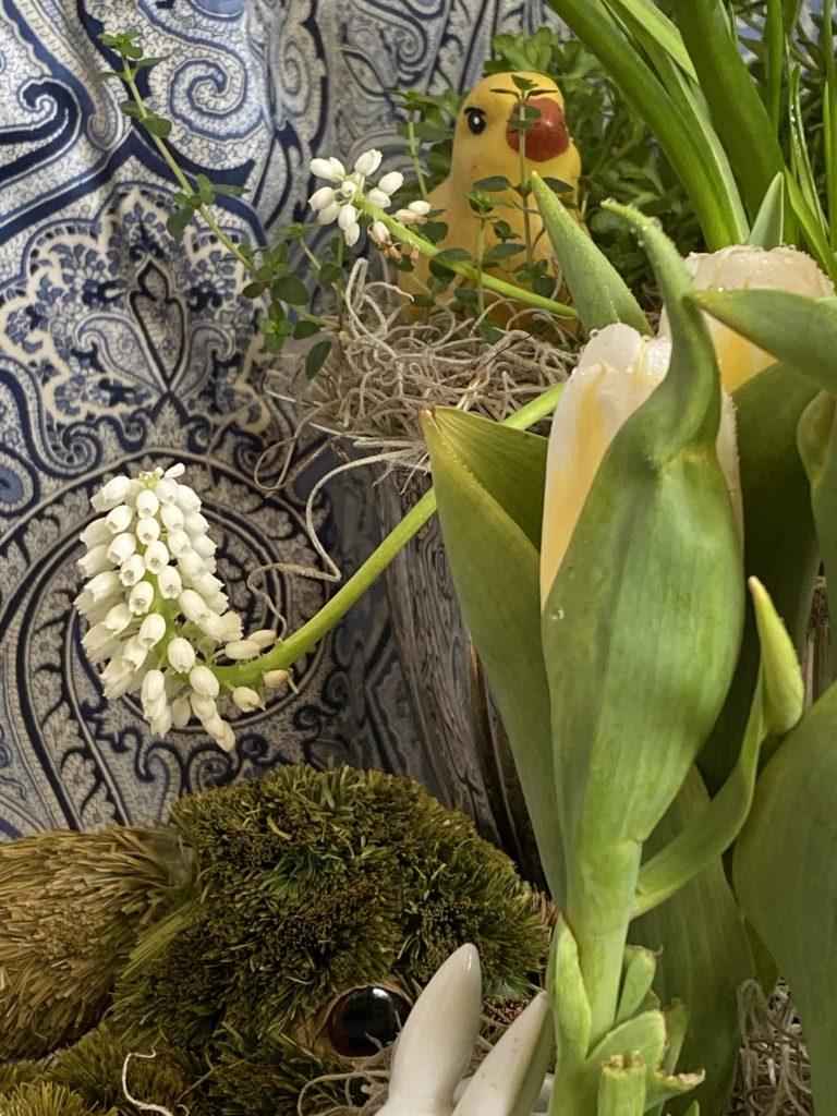 Indoor bulb garden, silver punch bowl, grape hyacinths, muscari