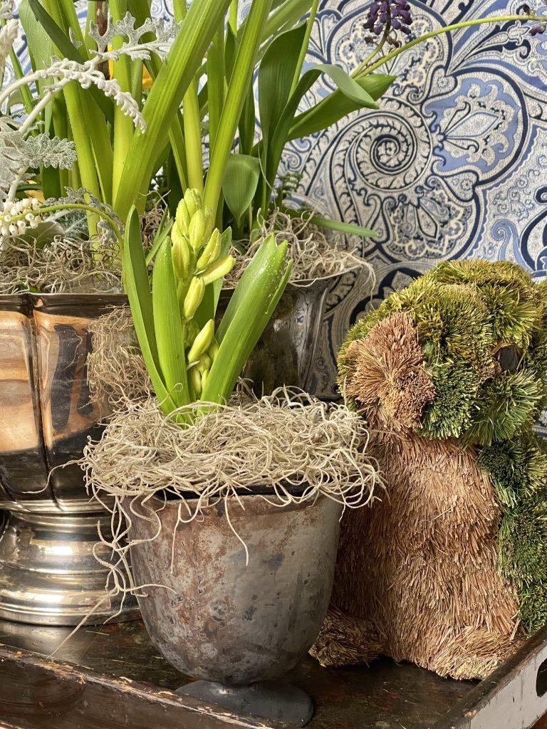 Easter display, easter bulb display, easter bunny, moss rabbit, indoor bulb garden in silver punch bowl