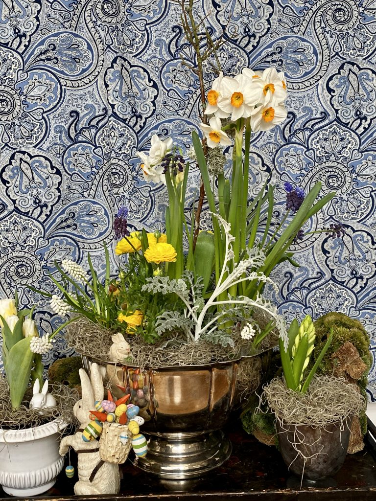 Indoor bulb garden in silver punch bowl, Easter display, easter bunny with backpack full of eggs, white muscari, grape hyacinths, narcissus, daffodils, white petals, saffron trumpets, spanish moss