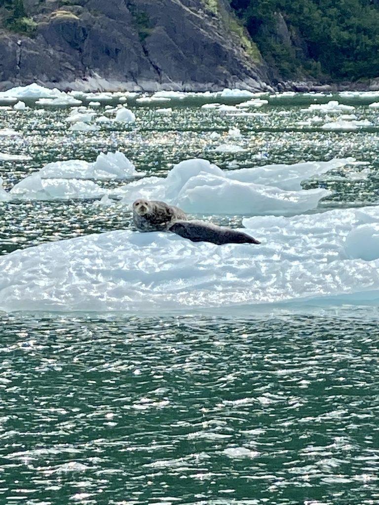 iceberg, blue icebergs, alaska, La Conte Glacier, La Conte Bay, icebergs, harbor seals, harbor seal pups